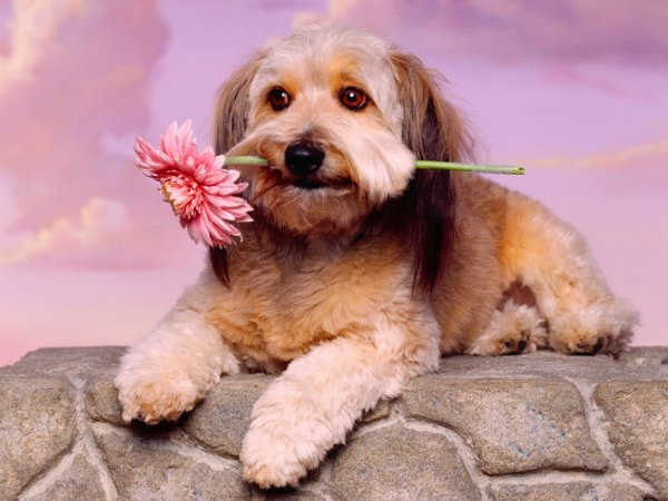 doggieflower